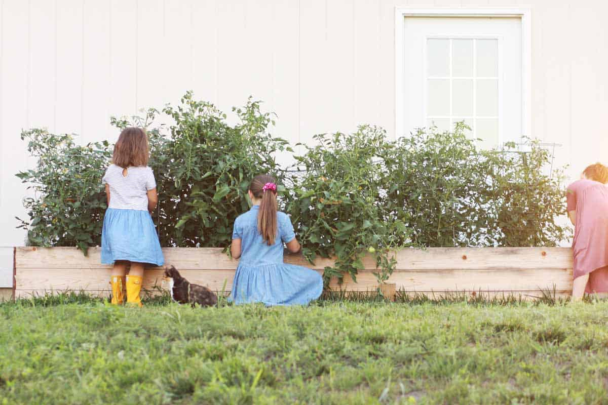 3 girls weeding a raised garden bed together